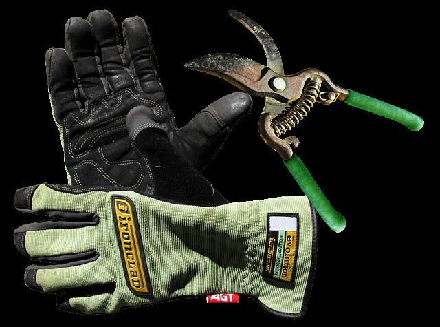 garden-gloves-pixabay